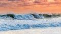 Ocean Spray print