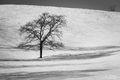 Tree Pose print