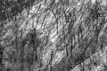 Trees & Shadows print