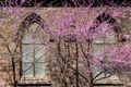 Windows in Spring print