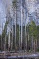 Fallen Trees print