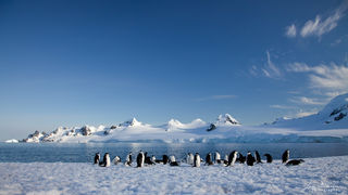 Antarctica, penguin, mountains, Half Moon island