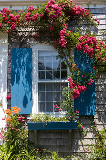 Nantucket, house, blue shutters, roses