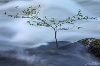 California, North America, United States, Yosemite, river, water, tree, spring