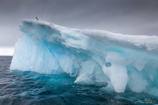 Antarctica, iceberg, penguin, blue water, brown bluff