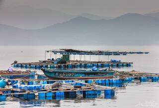 Grass Island, Hong Kong, Tap Mun, fish farm