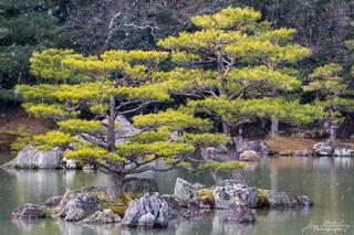 Japan, Kyoto, trees, snow, Kinkakuji, Golden Temple