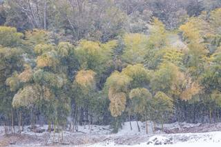 Yamanouchi, Nagano, Japan, forest, trees, snow, winter
