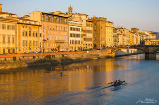 Shells on the Arno