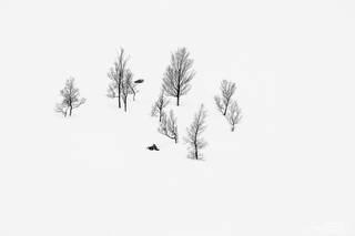 Norway, Senja, Anderdalen, trees, B&W