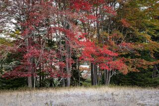 Red leaves and frost