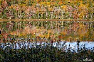 Autumn Pond View