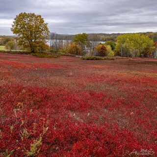 Sloping Red Fields