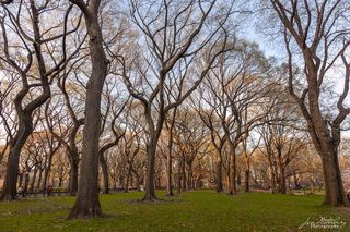 Central Park, New York, North America, United States, trees