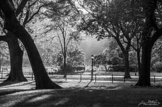 Central Park, New York, New York City, North America, United States, black & white
