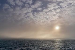 Arctic Mist
