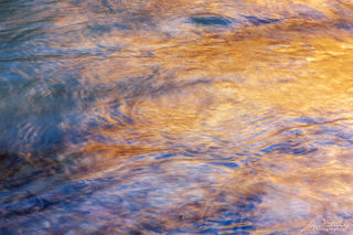reflections, stream, Zion National Park