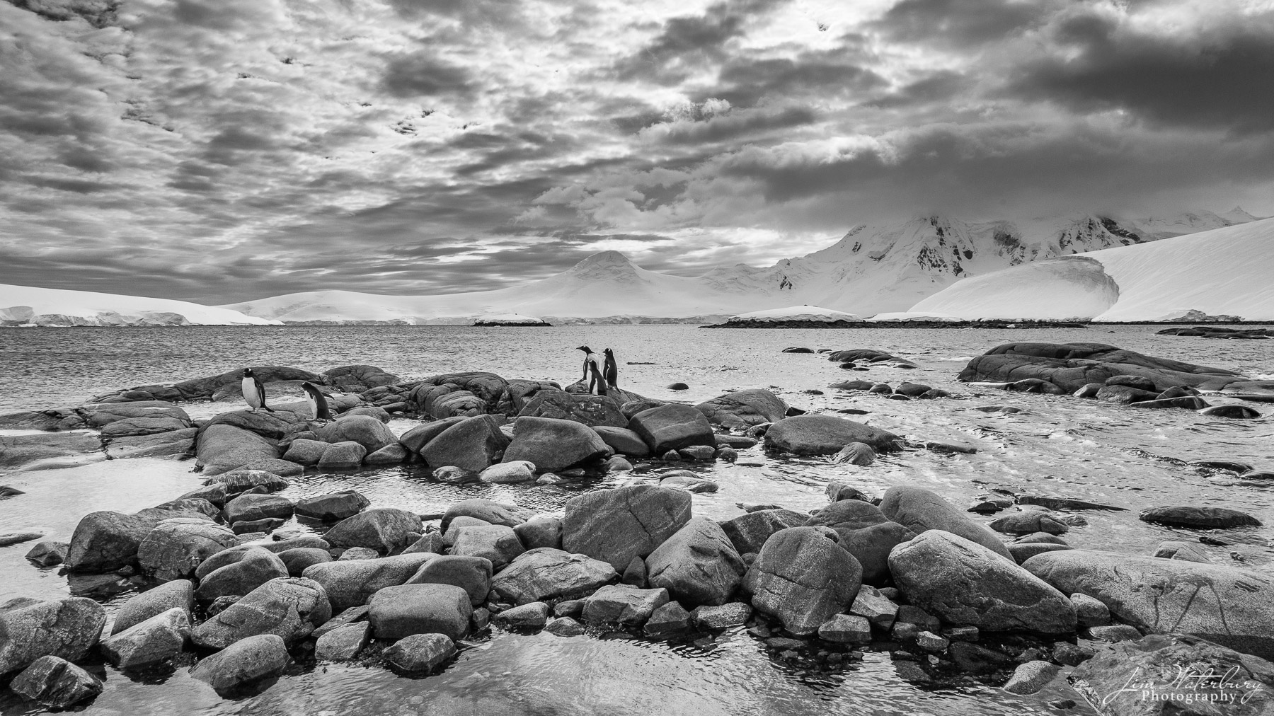 Black & white image of two penguins keeping lookout from the rocky shores of Port Lockroy, Antarctica.