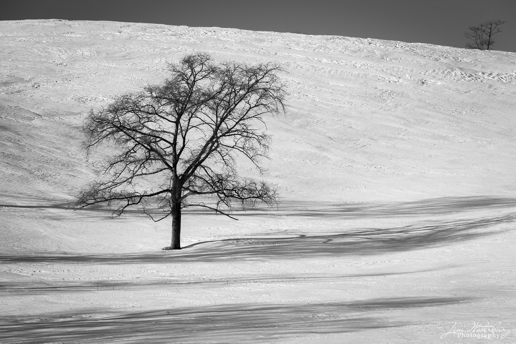 A black & white image of a lone tree posed in the snow-covered hills of Hokkaido, Japan, casting shadows on the newly fallen...