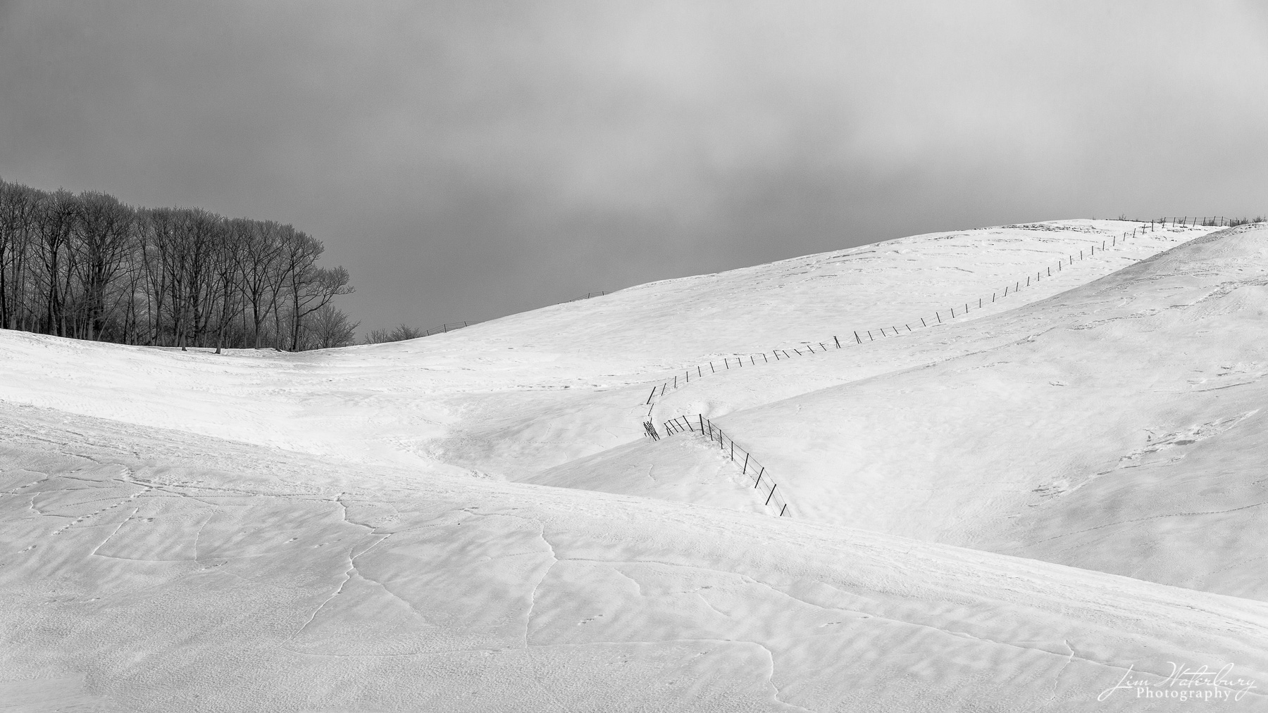 Black & white image of a stand of trees on top of a snow-covered hill, with a fence dividing it, and a moody sky above.  Hokkaido...