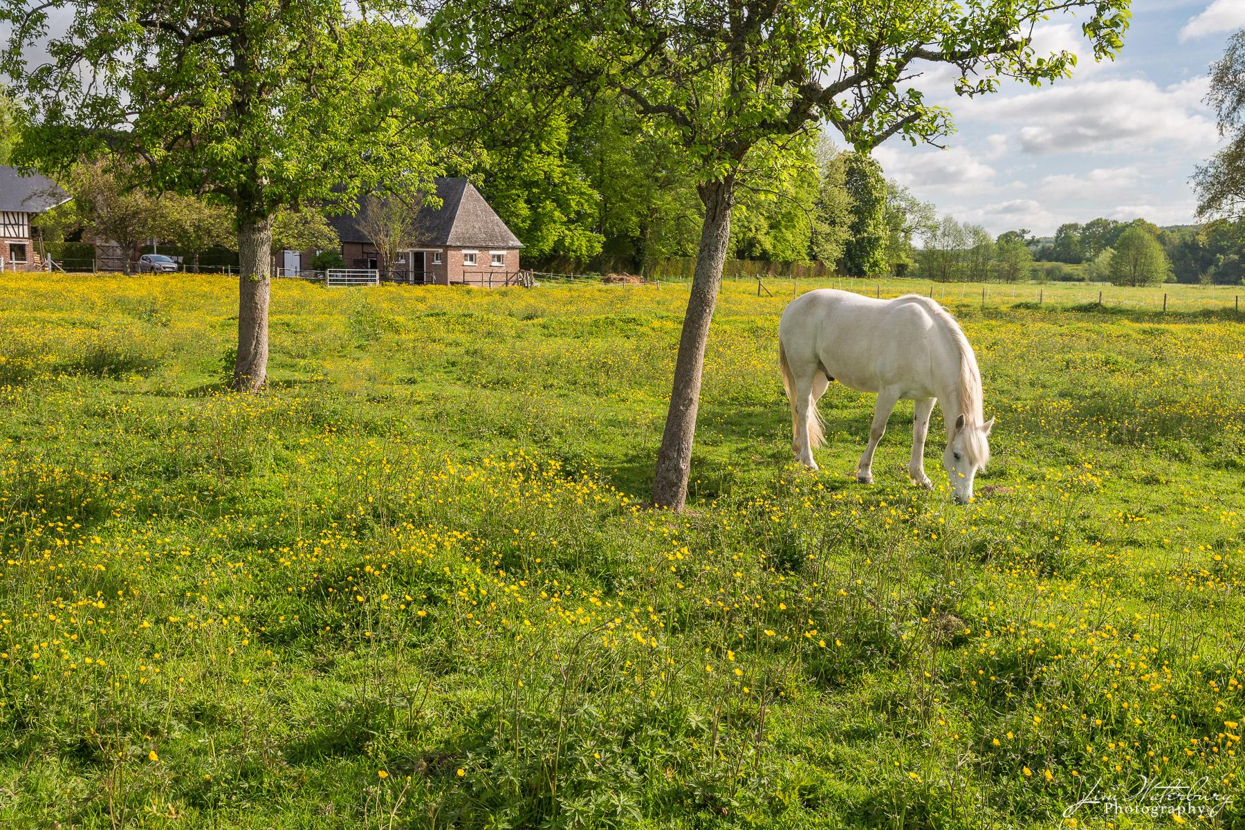 Horses at pasture outside Chateau de Vastoeuil, Normandy, France
