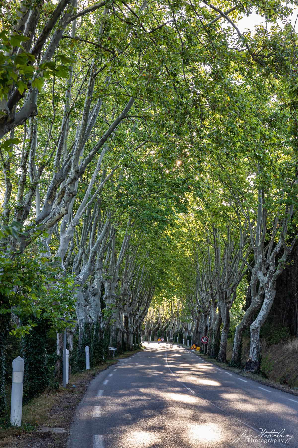 Plane trees near St. Remy for a tunnel along a country road.