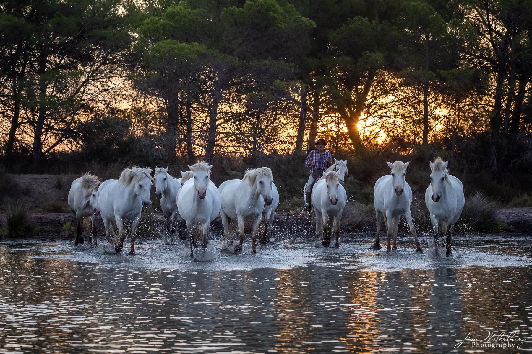 Camargue, horses, photo