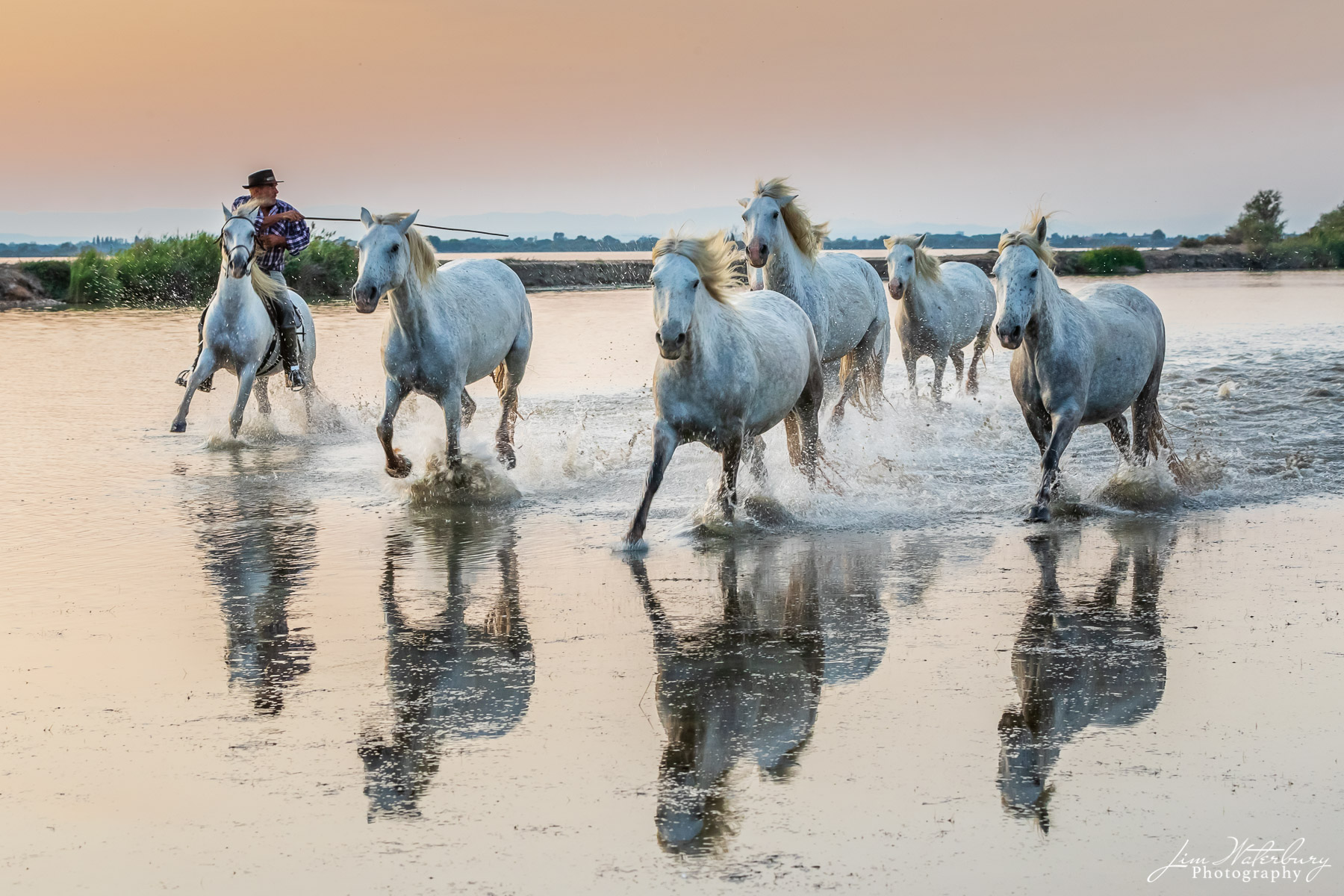 Camargue, horses
