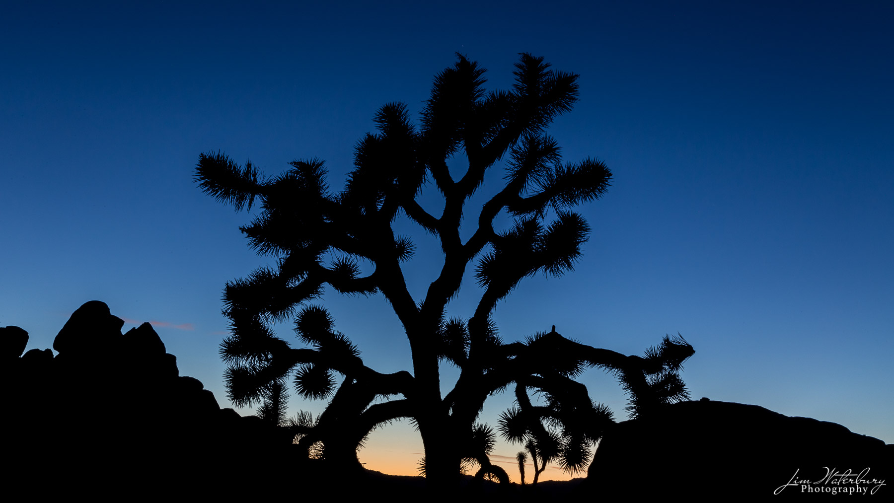 California, Joshua Tree NP, tree, silhouette, sunset, photo