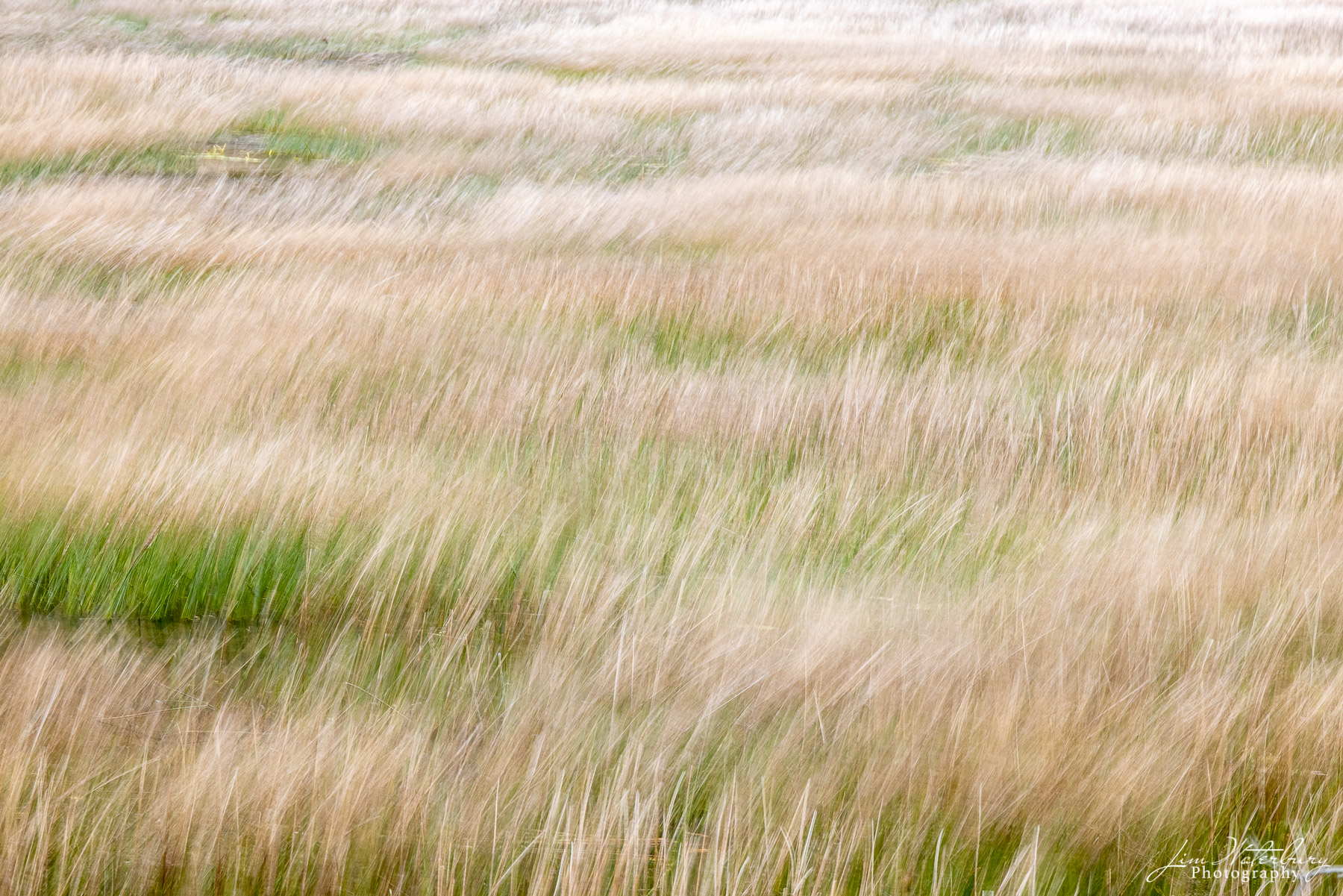 Grasses dancing in the wind.