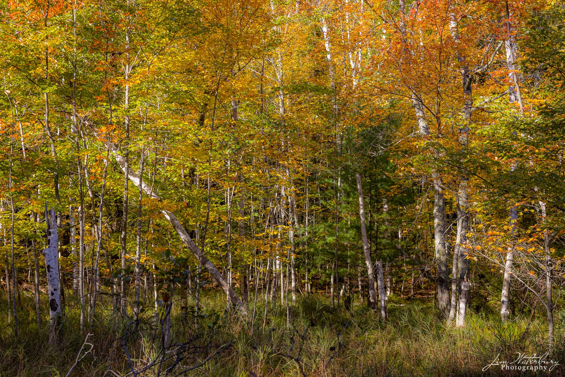 Fall colors bathed in early morning light along a carriage road in Acadia National Park.