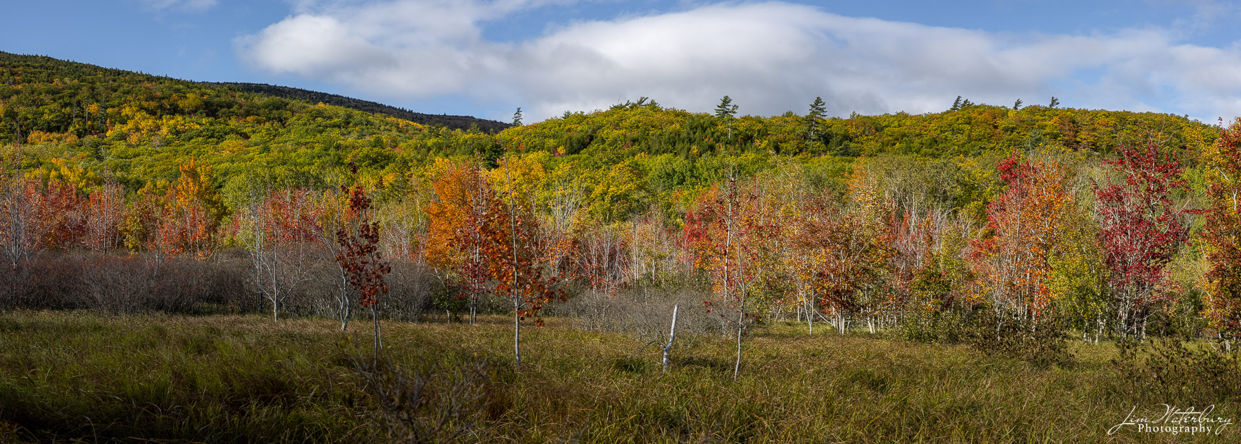 Panoramic image of fall colors on Mount Desert Island, Maine.