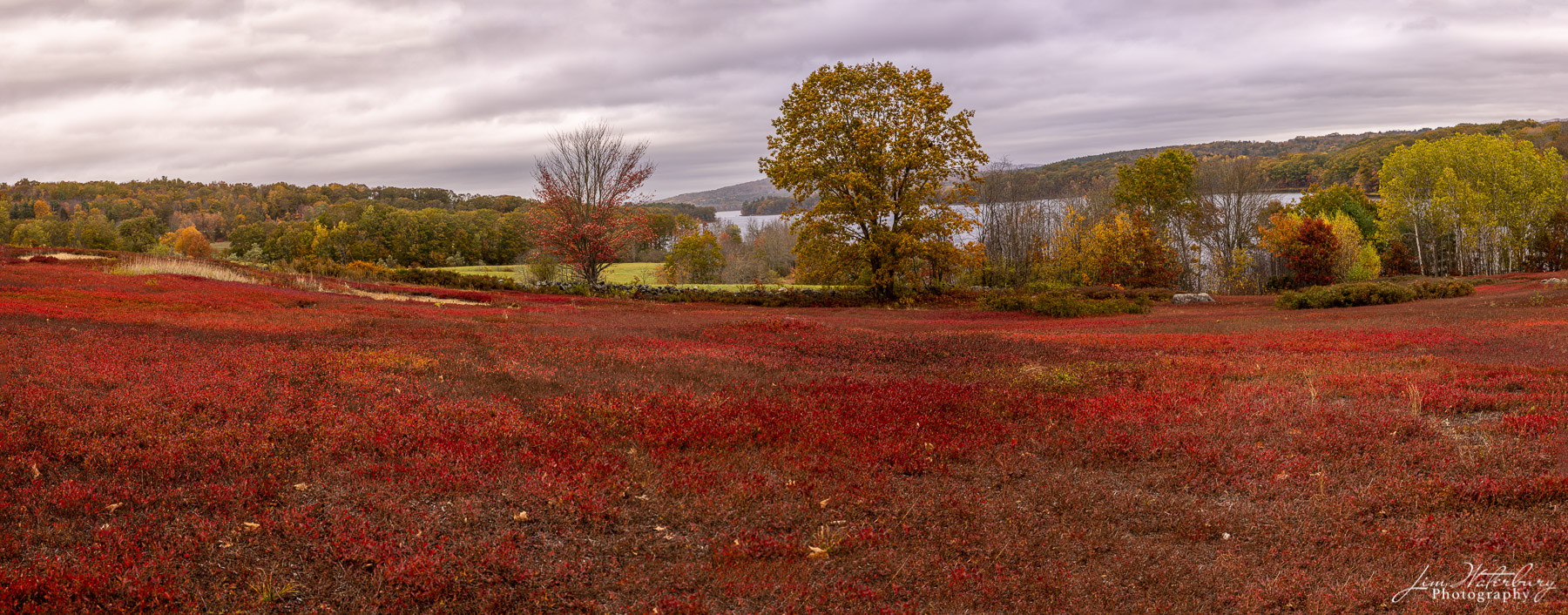 Panoramic image of the Blueberry fields, near Beth's Farm Market, on the road to Union, Maine.