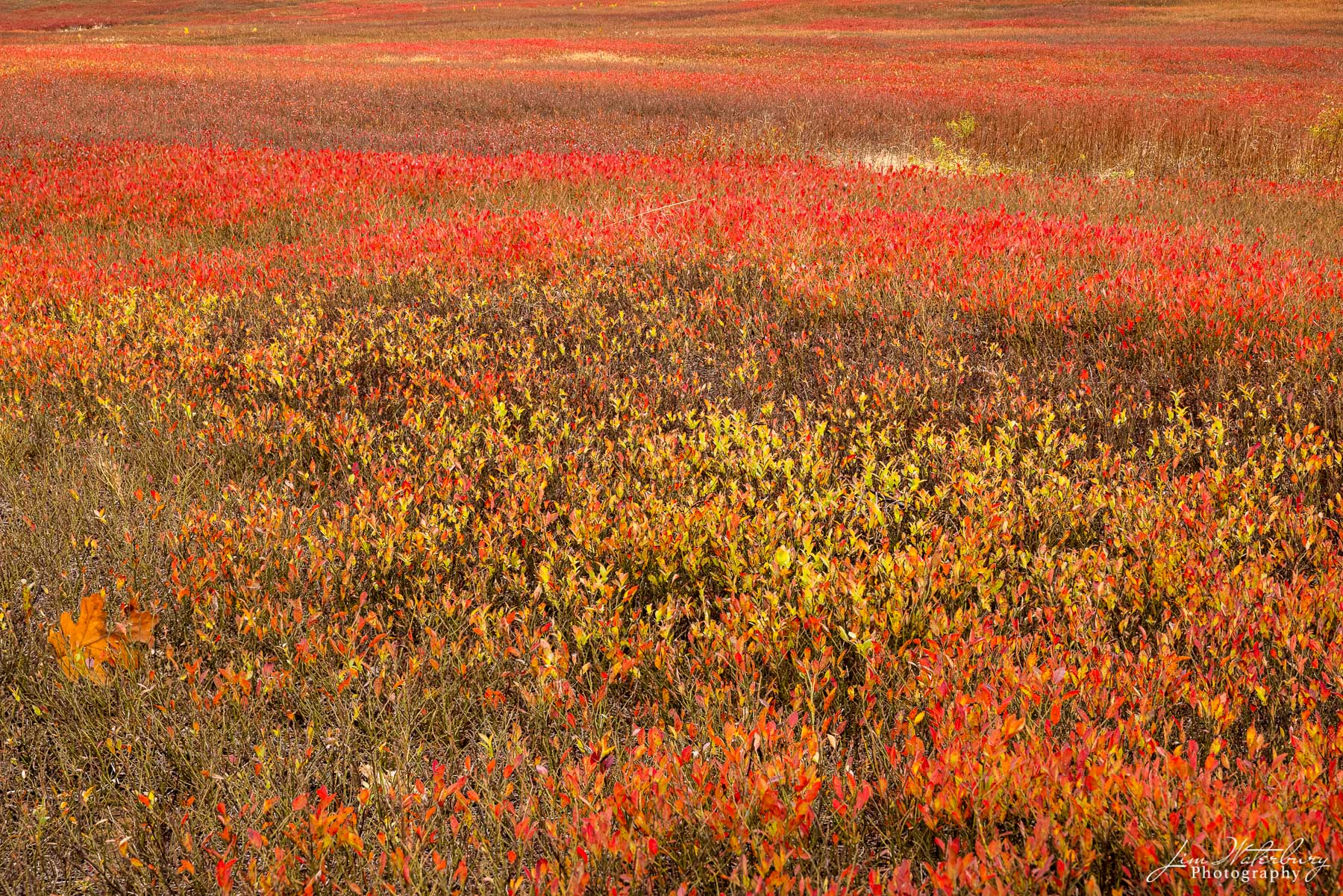 Blueberry fields, near Beth's Farm Market, on the road to Union, Me.
