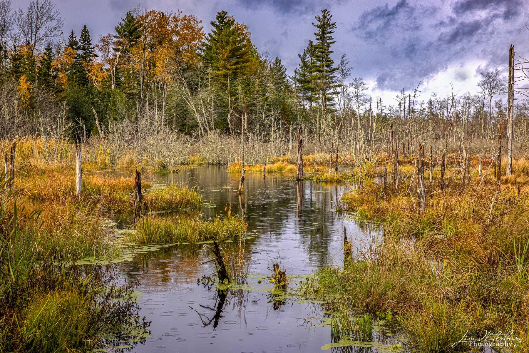 Raindrops falling in a marsh near Cushing, Maine