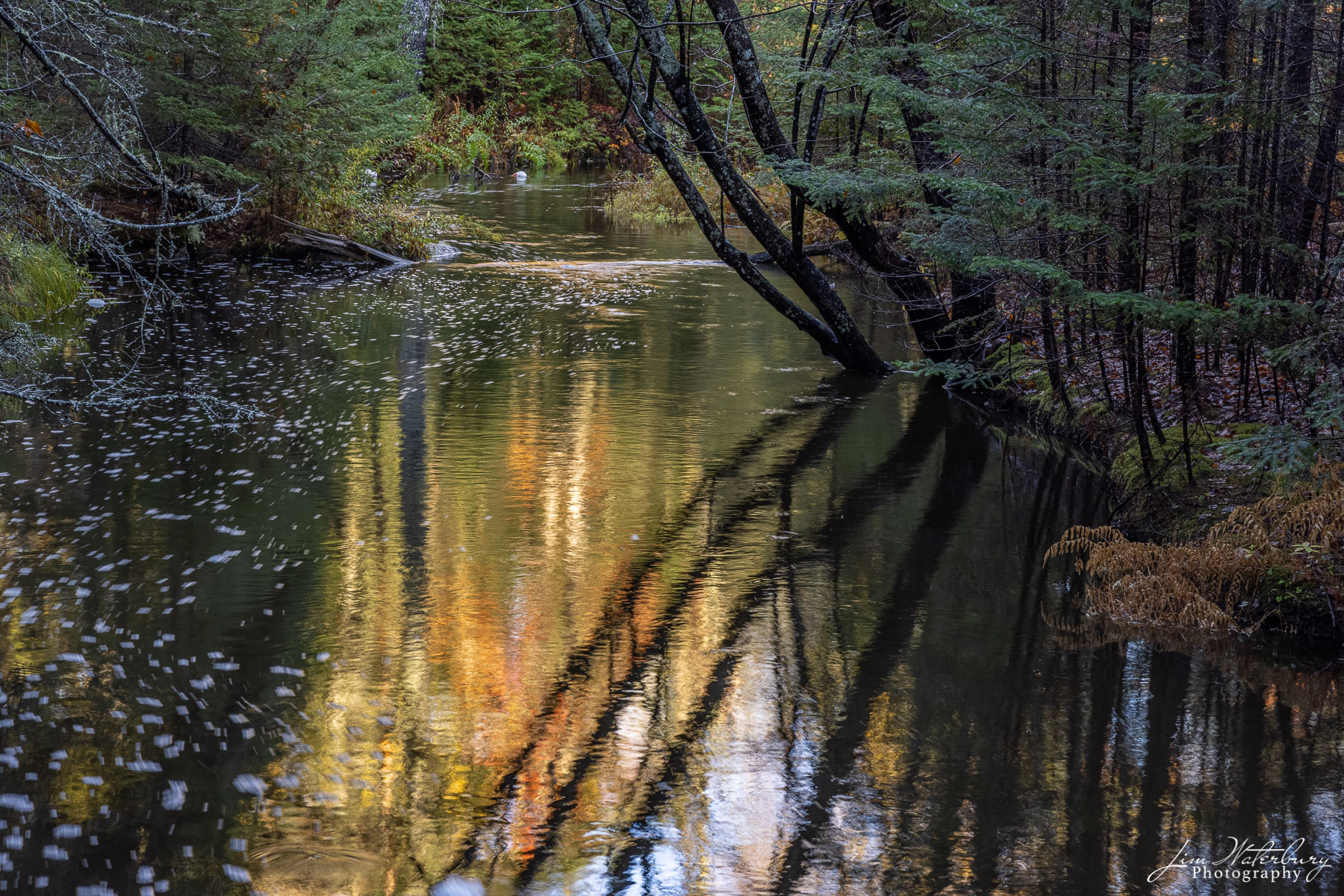 Trees and reflections in the Goose River, near Cushing, Maine.