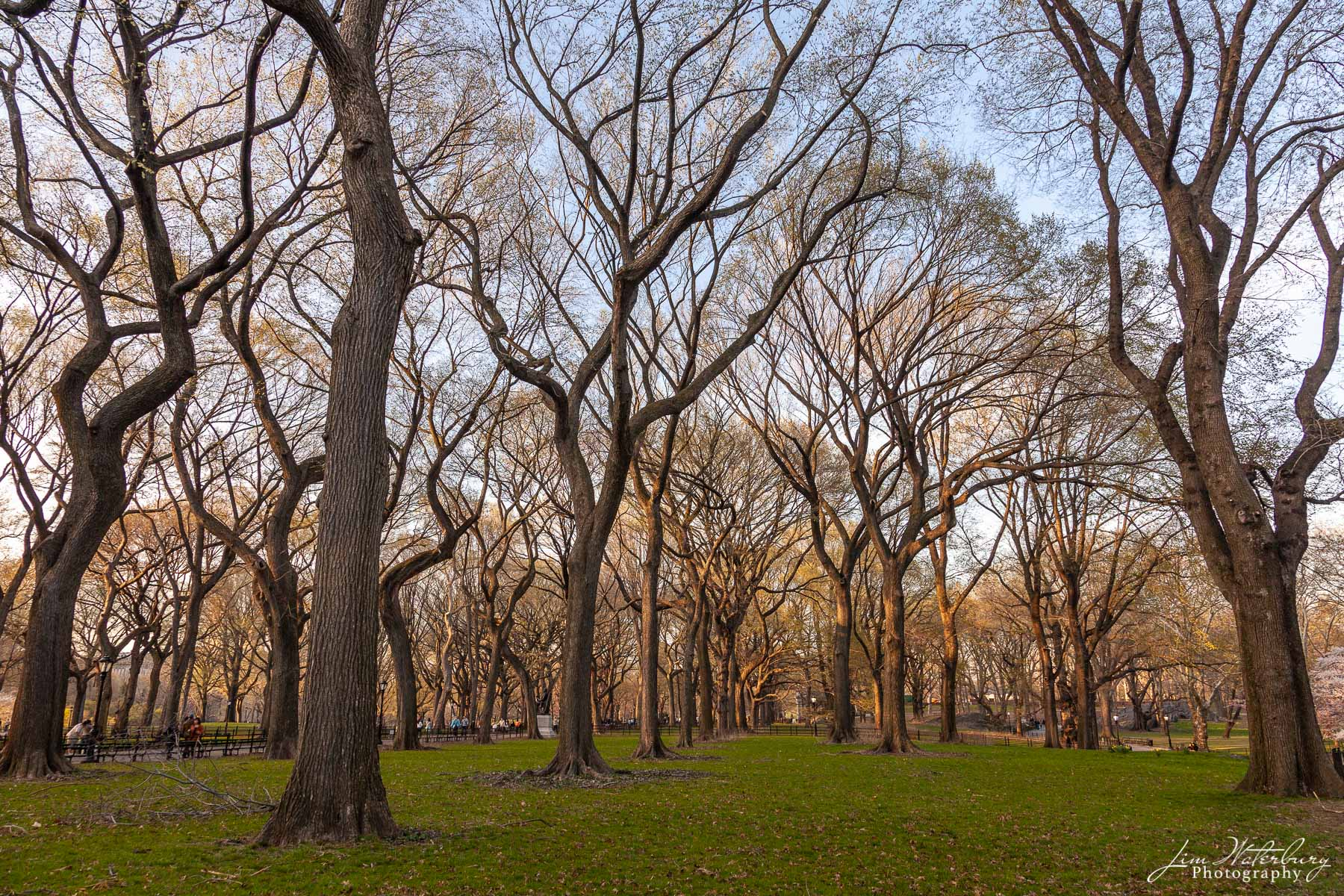 Central Park, New York, North America, United States, trees, photo