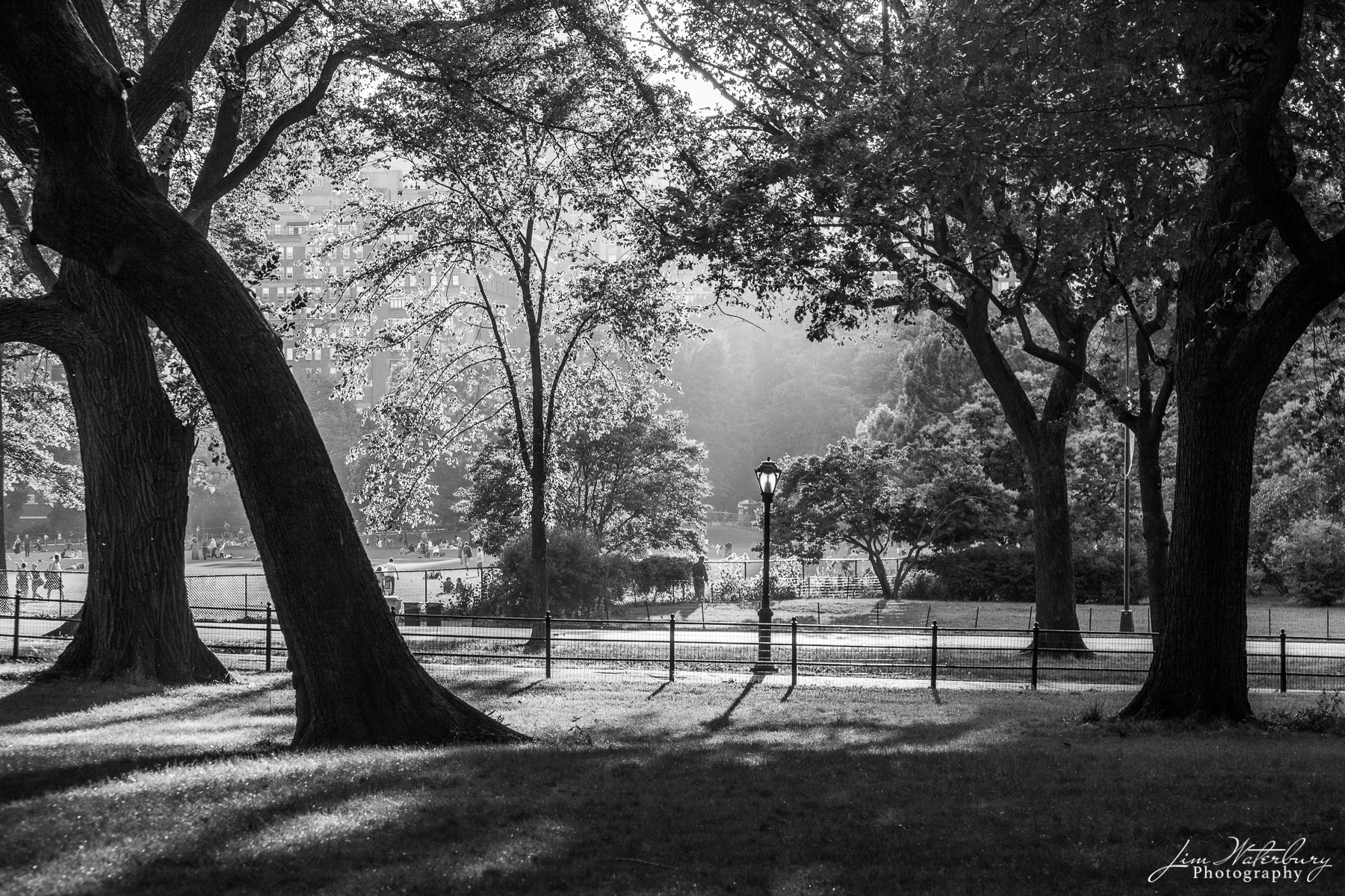 Summer evening in Central Park, New York City.  Black & white.