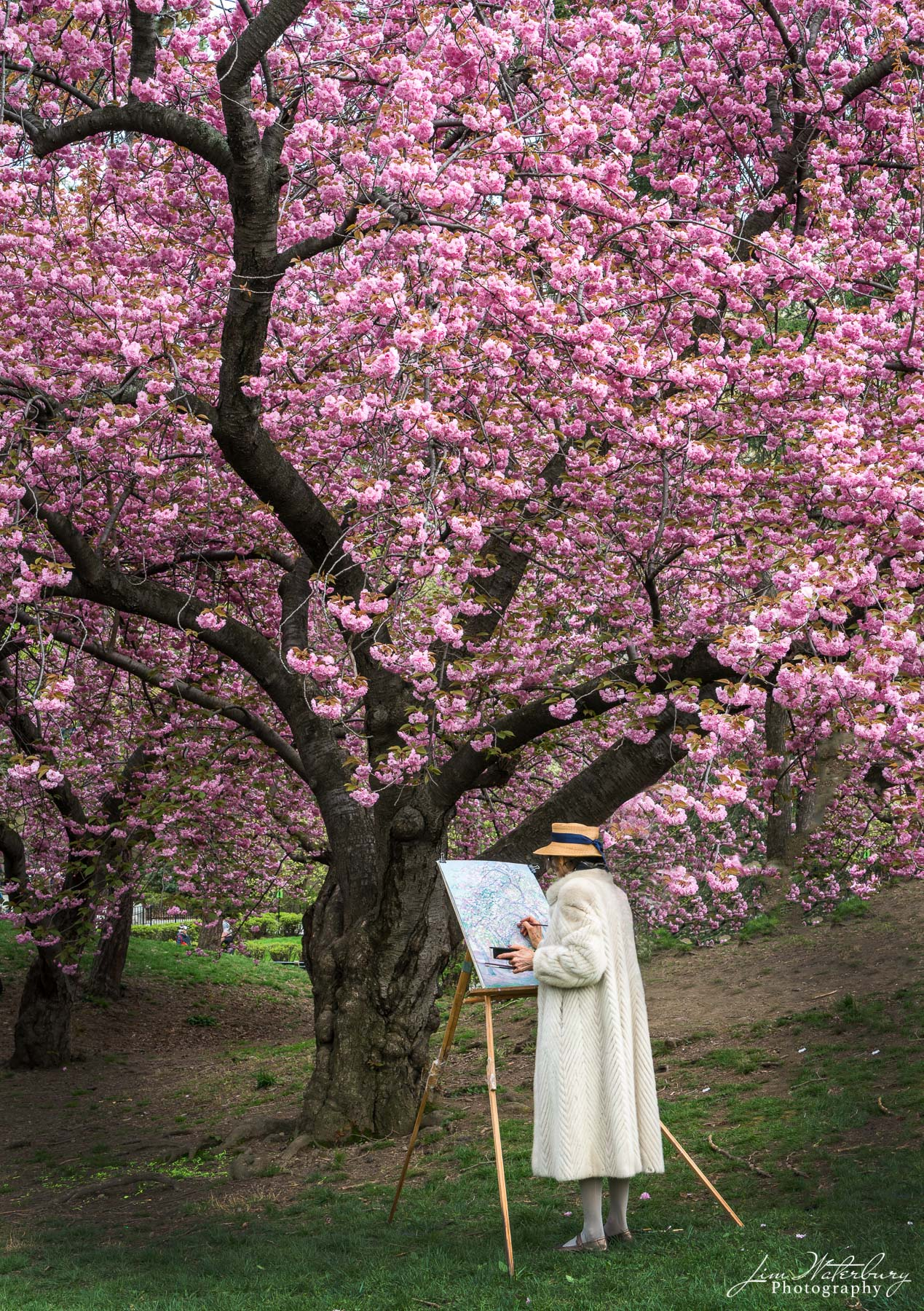 Artist painting under a flowering cherry tree in the Spring in Central Park, New York City