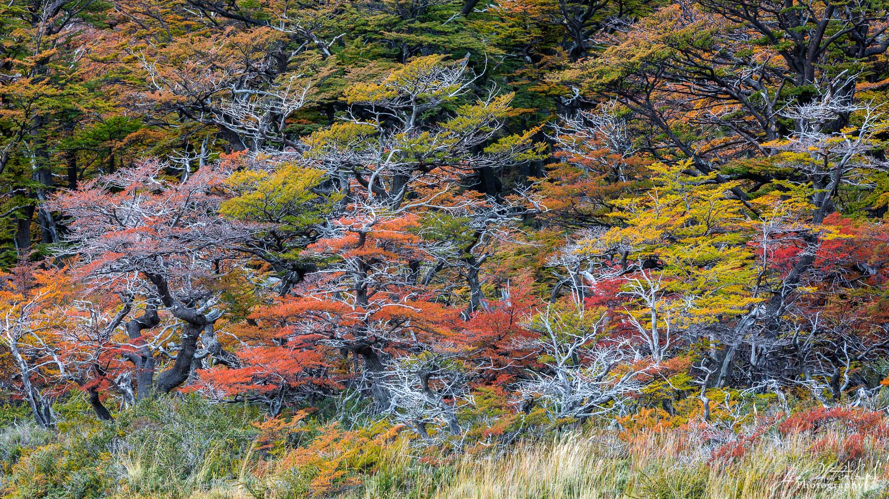 fall, color, forest, trees, Los Glaciares, Argentina, photo