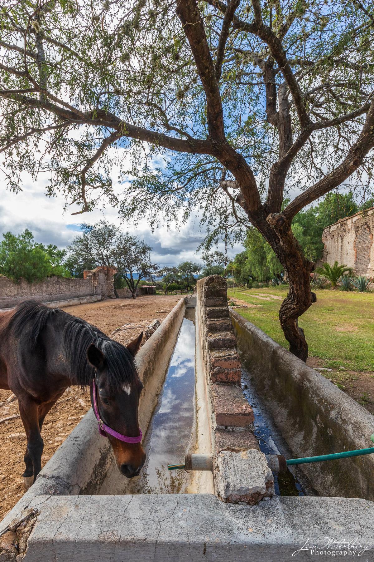 Mexico, North America, San Miguel de Allende, photo