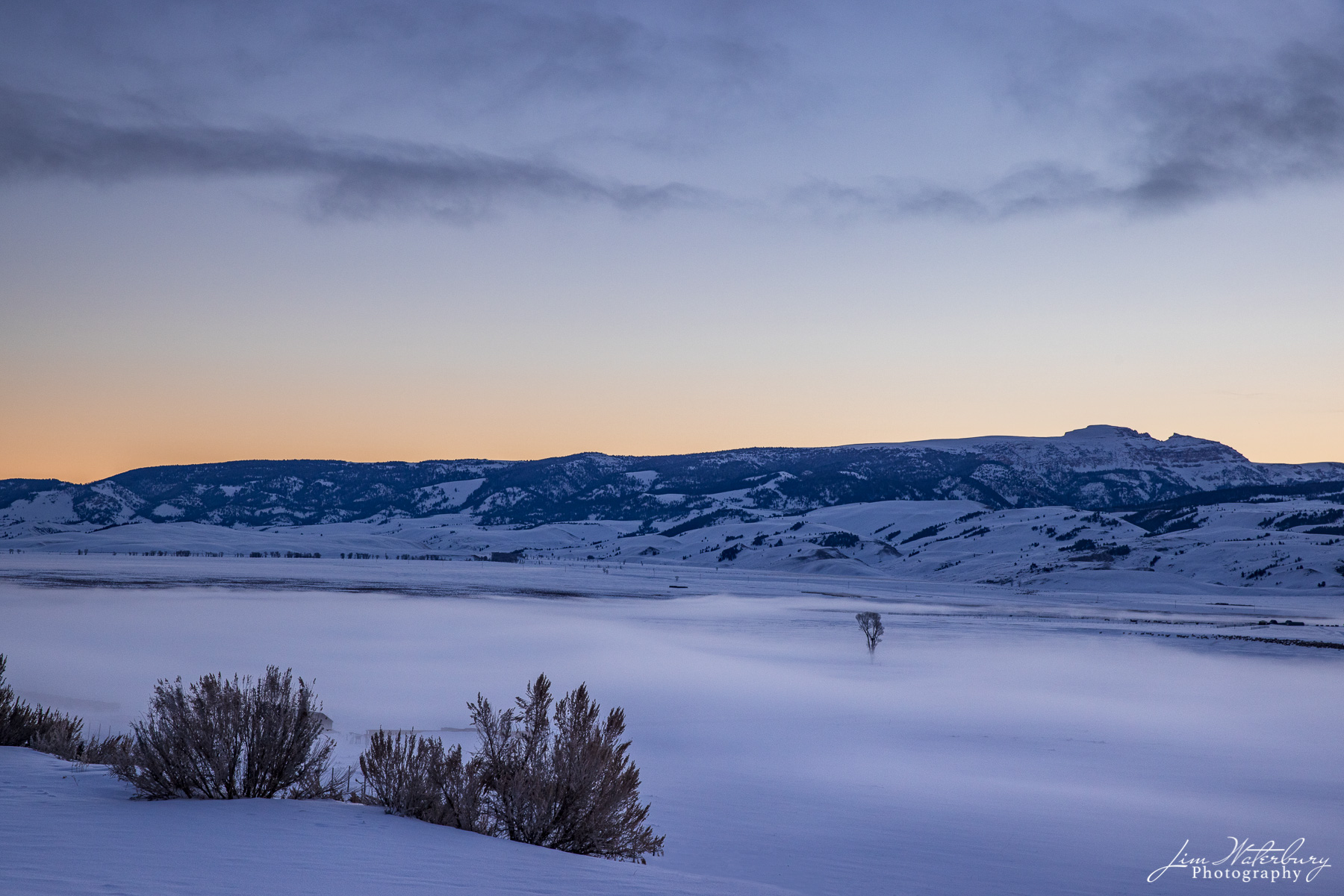 """View at dawn of a lone tree rising out of the mist in snow covered Flat Creek, looking across to the """"Sleeping Indian"""" mountain..."""