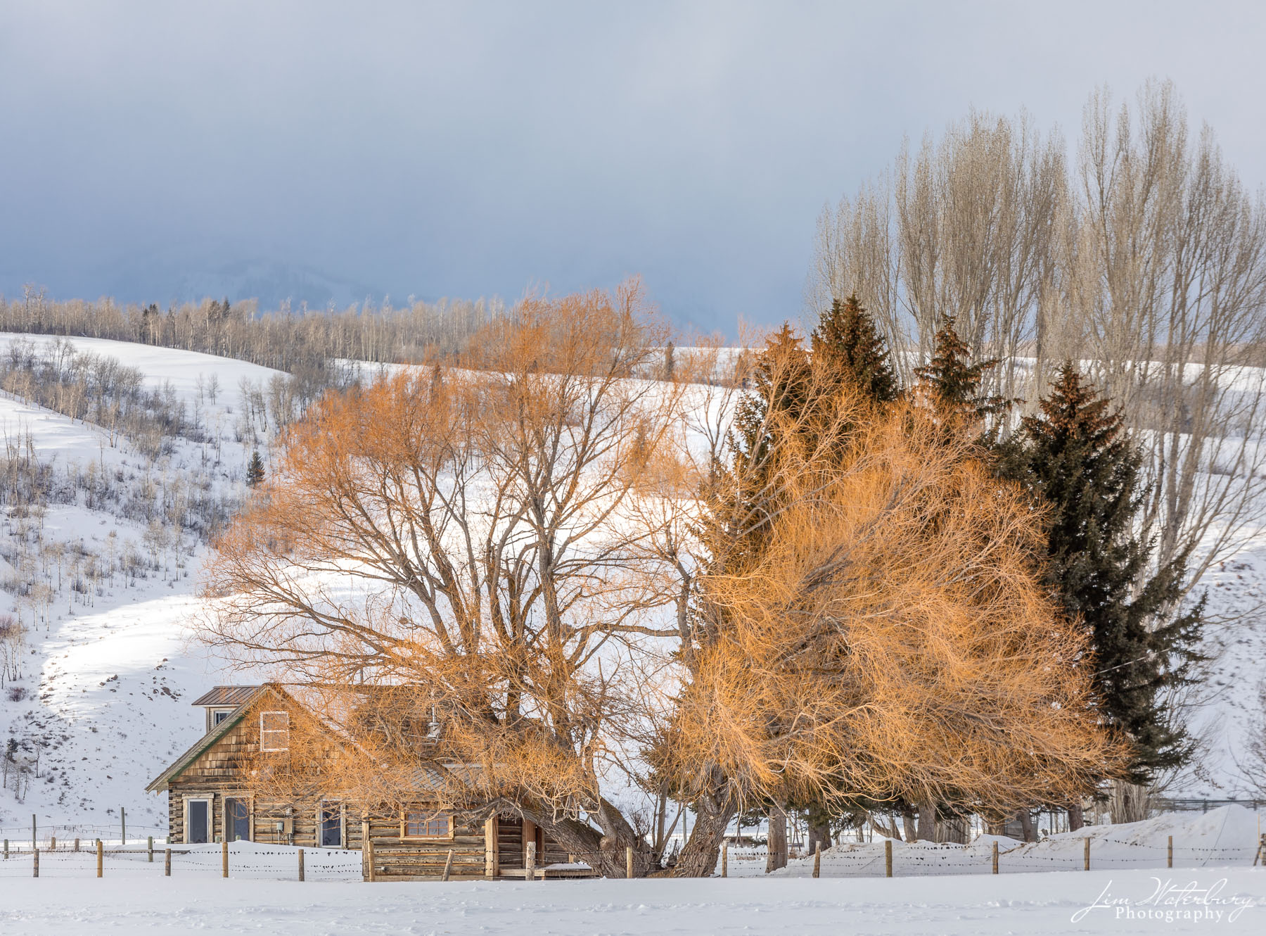Willow trees in winter, Spring Gulch Road, Jackson, WY