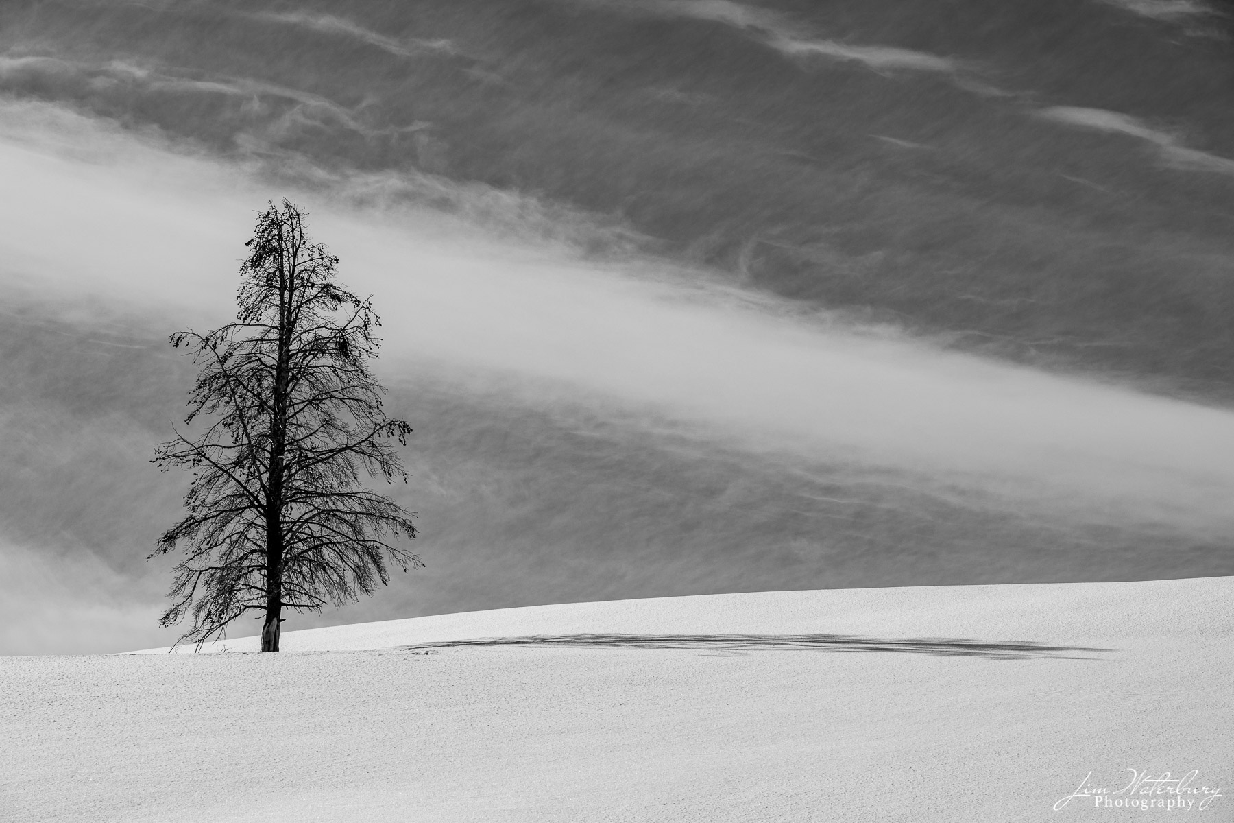 Black & white image of a lone tree standing among the rolling, snow-covered hills of the Hayden Valley in Winter.