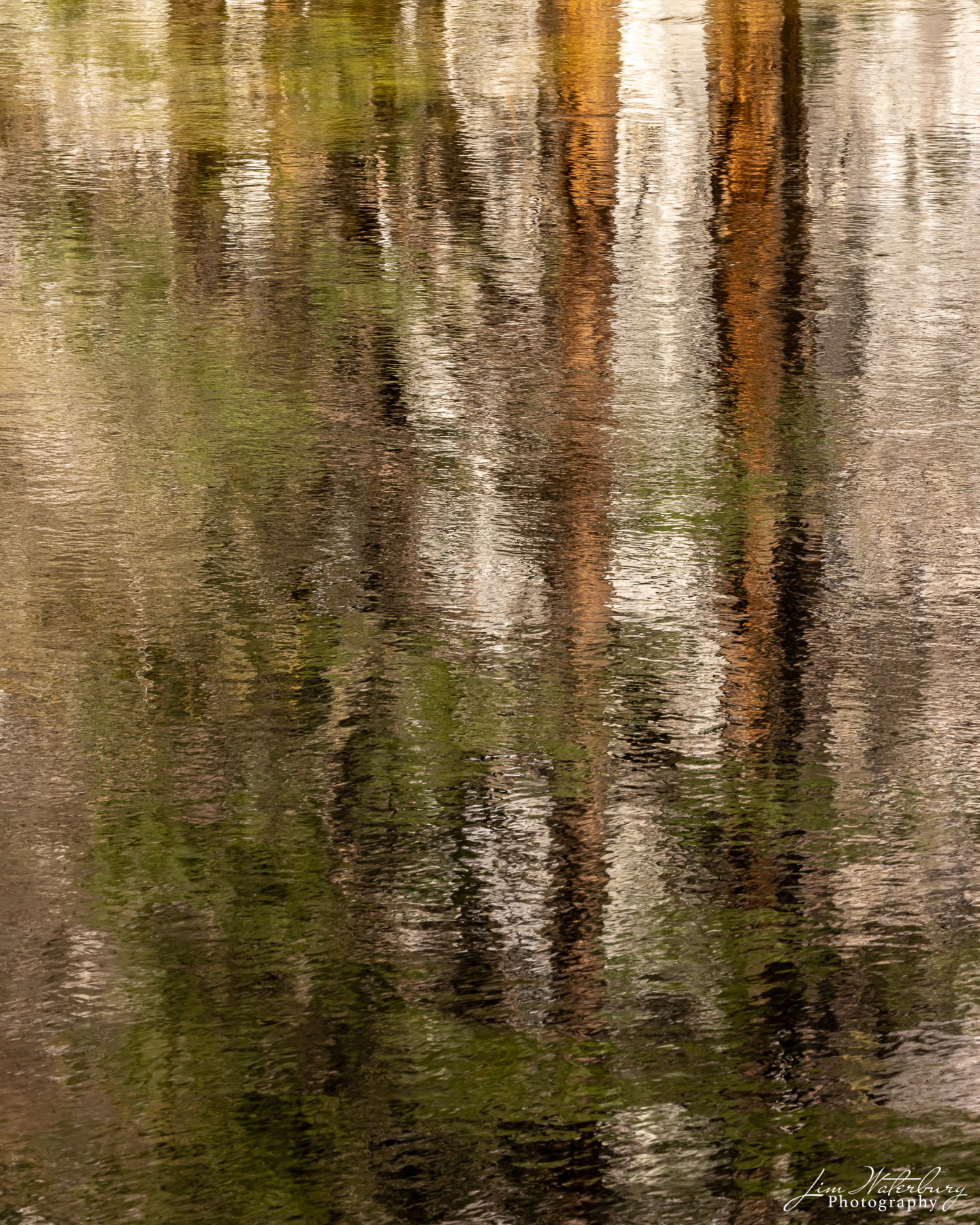 Reflections of trees in the Merced River.