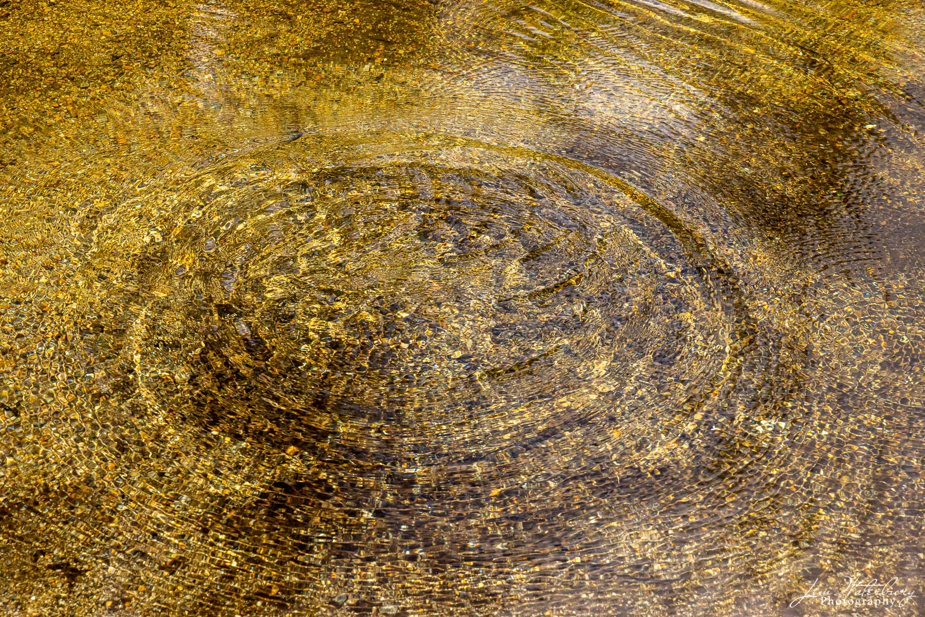 Ripples on the surface of the water cause a circle that outlines the golden-colored collection of rocks on the river bottom.